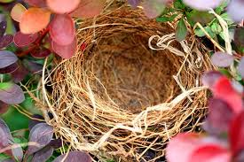 Understanding Empty Nest Syndrome from Tennessee Divorce Statistics